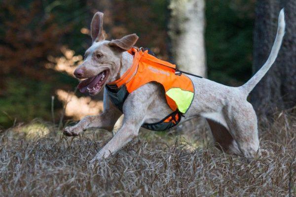 Dogtrace GPS mellény kutyáknak (7)