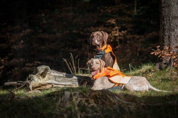 Dogtrace GPS mellény kutyáknak (8)